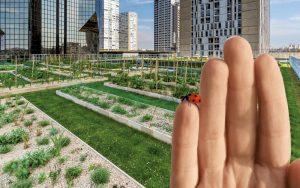 Henke Dachdecker für Bückeburg - Die innovativen Systeme der Dachbegrünung 4.0 von ZinCo haben das Potential, Dächer revolutionär neu zu nutzen – in Bezug auf Wasserrückhalt, Verdunstung und Biodiversität