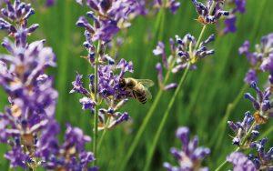 Henke Dachdecker für Herford - Das besonders bienenfreundliche Gründach