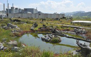 Henke Dachdeckerei | Zimmerei | Solartechnik für Stadthagen - Bauder Biotop - Artenvielfalt auf dem Flachdach
